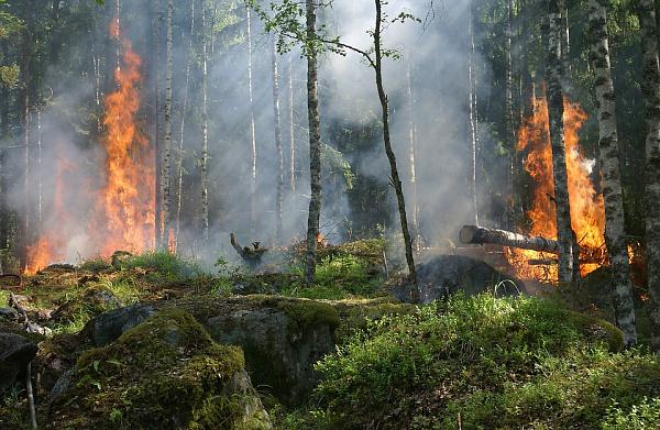 Дым отпожаров вМонголии накрыл Бурятию