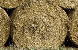 Жительницы Иркутской области уничтожили сена на 260 тысяч рублей