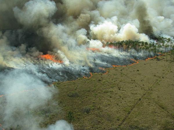 Минприроды Забайкалья втрое занизило площадь настоящих лесных пожаров